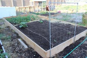 July Garden 1