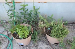 july garden 12