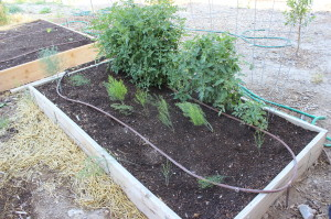july garden 6